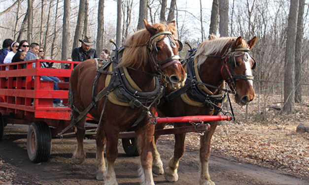 Tap into spring at the sugar bush maple syrup festival