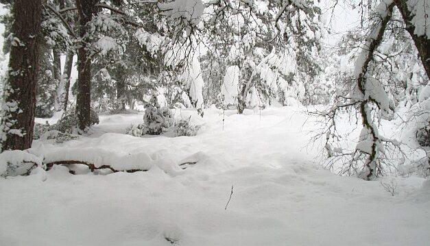 East Coast turns into Winter wonderland