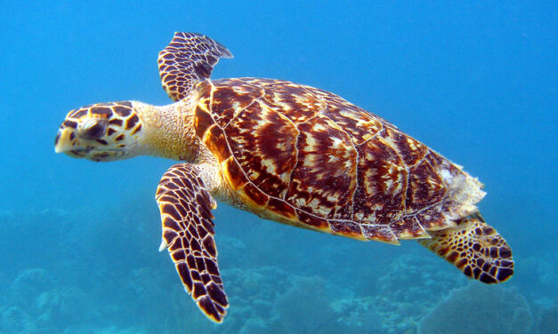Glowing sea turtle is first biofluorescent reptile discovered