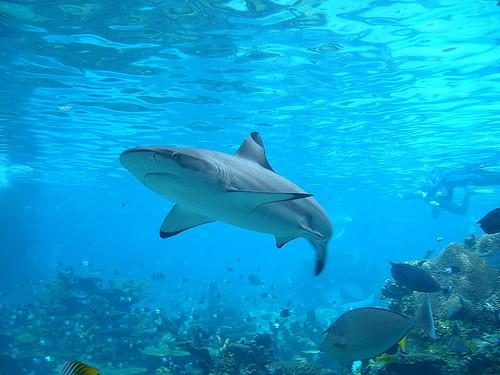 No more shark fins in Canada?