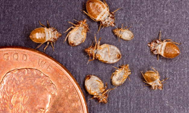 Bed bugs on TTC nothing to worry about, health officials say