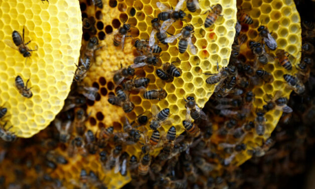 A buzz kill for the bees