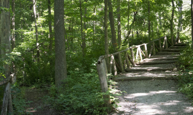Humber Arboretum named one of Toronto's most beautiful places to walk