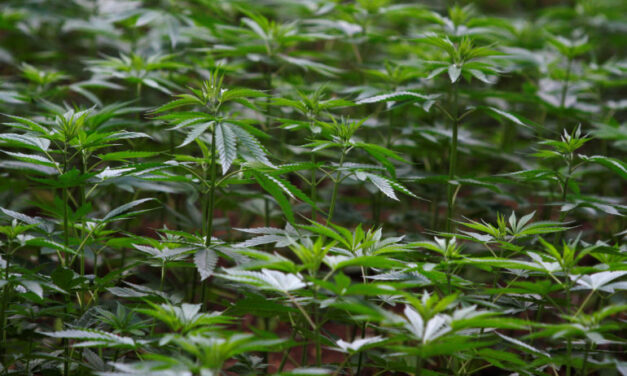 Marijuana sales in Ontario only available online, Fedeli says