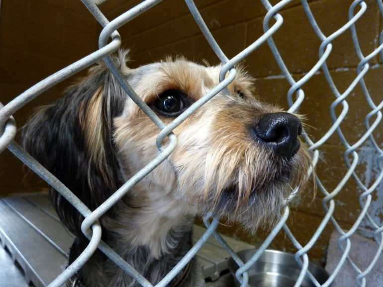 Shelter animals get a second chance in California – Humber News