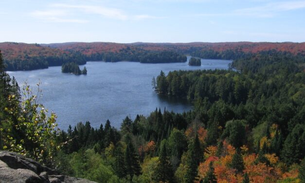 Search dog finds missing teens in Algonquin Park within minutes