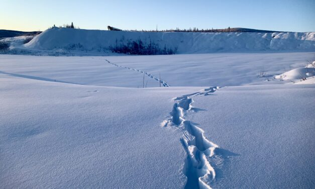 Yukon 'snow artist' wins 18th annual 1stArt! contest for her work