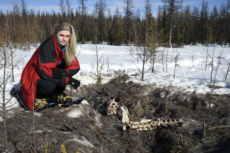 Sheryl Fink, director of Canadian WIldlife Campaigns argues that the poisons currently used against predator animals are inhumane.